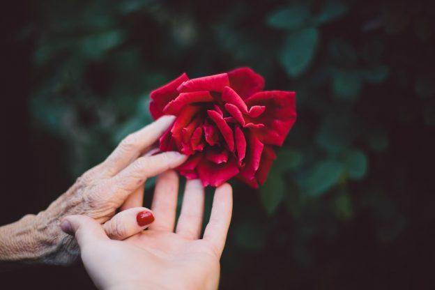 Eine jüngere und eine ältere Hand berühren die rote Rose