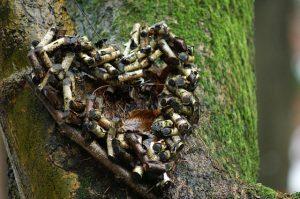 Ein Herz aus Holz zurecht gelegt