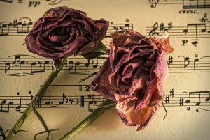 Rosenblüten liegen auf Notenblätter